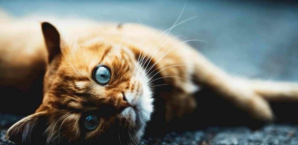 Spanish Idioms - Cats, Turkeys & Husbands Falling from the Sky