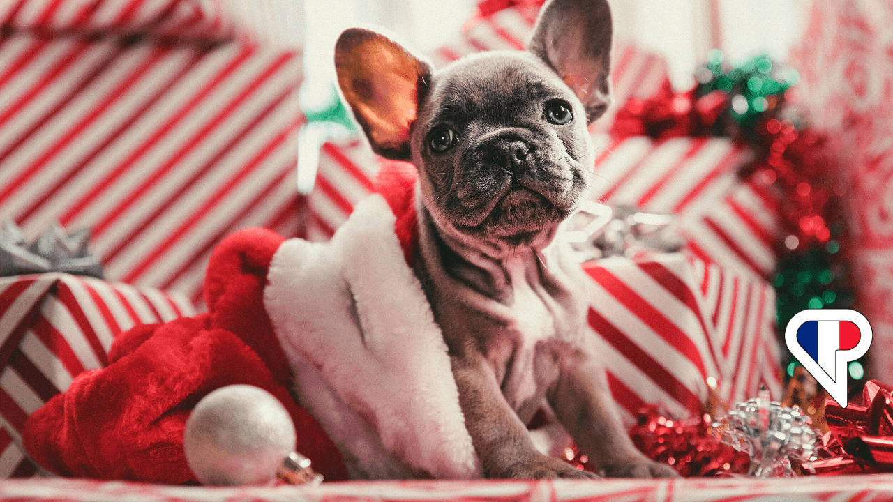 Merry Christmas in French: How To Celebrate Noël à la Française